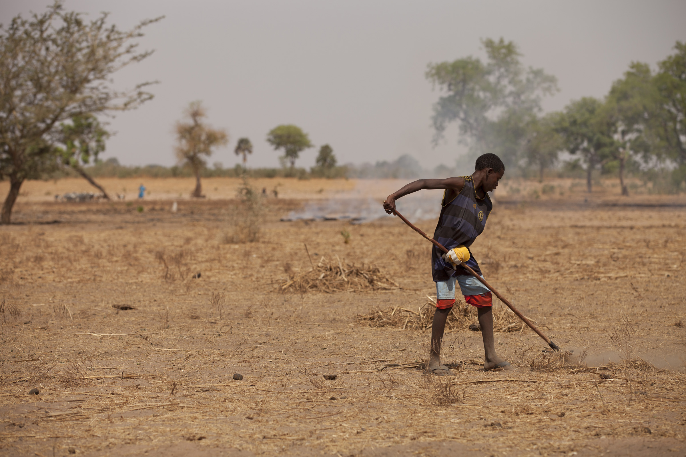 A young boy rakes away crop covers in land affected by wind erosion (Senegal). Photo: Milo Mitchell. Source: Flickr (IFPRI Image)