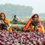 IFPRI Policy Seminar: It Is Time – Gendered Time Use in Agriculture-Nutrition Pathways